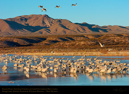 Bosque_Crane_Pool_Chupaderas_5011