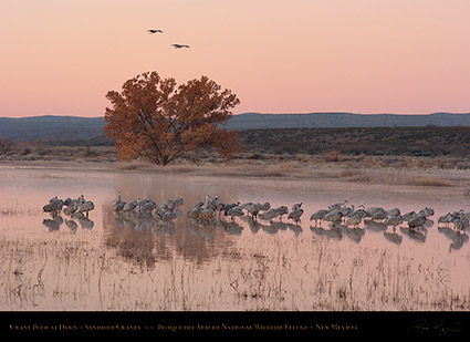 Bosque_Crane_Pool_at_Dawn_2316