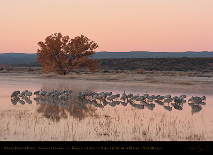 Bosque_Crane_Pool_at_Dawn_2318