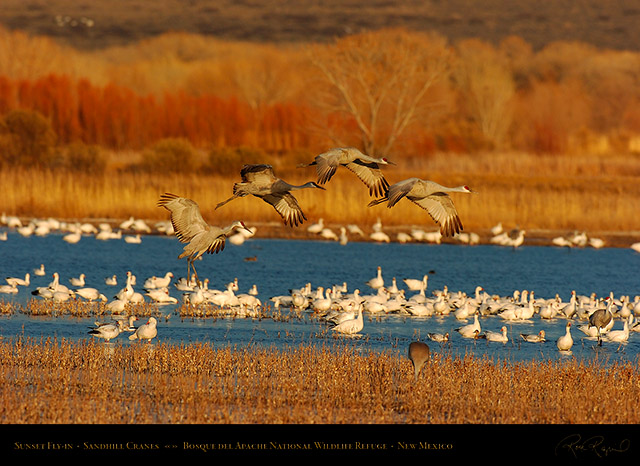 Bosque_del_Apache_Sandhills_at_Sunset_6865