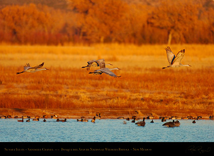 Bosque_del_Apache_Sandhills_at_Sunset_HS0430