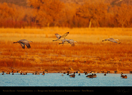 Bosque_del_Apache_Sandhills_at_Sunset_HS0431