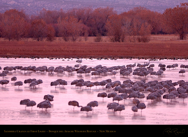 SandhillCranes_FirstLight_HS1042