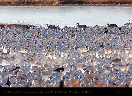 SnowGeese_andCranes_atSunrise_HS8397