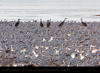 SnowGeese_andCranes_atSunrise_HS8398