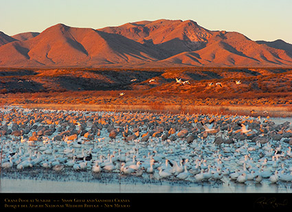 Bosque_Crane_Pool_at_Sunrise_3264