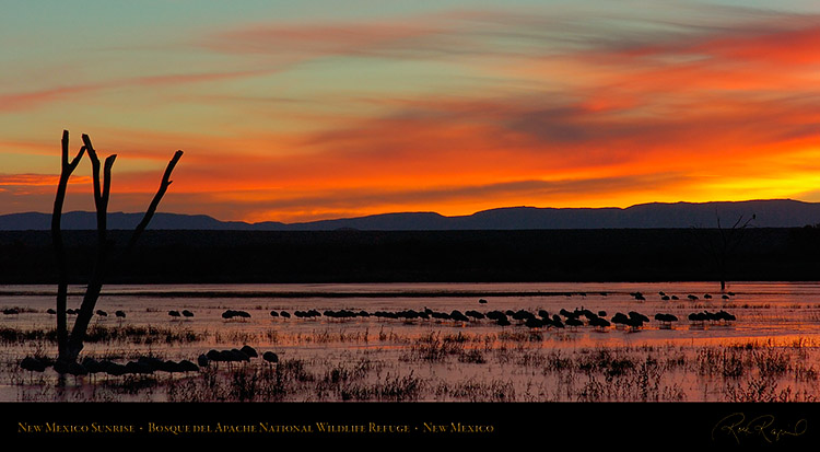 Bosque_del_Apache_Dawn_6492_pano