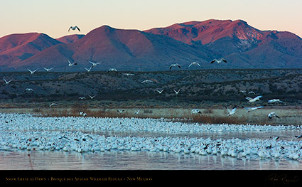 SnowGeese_atDawn_6417_16x9