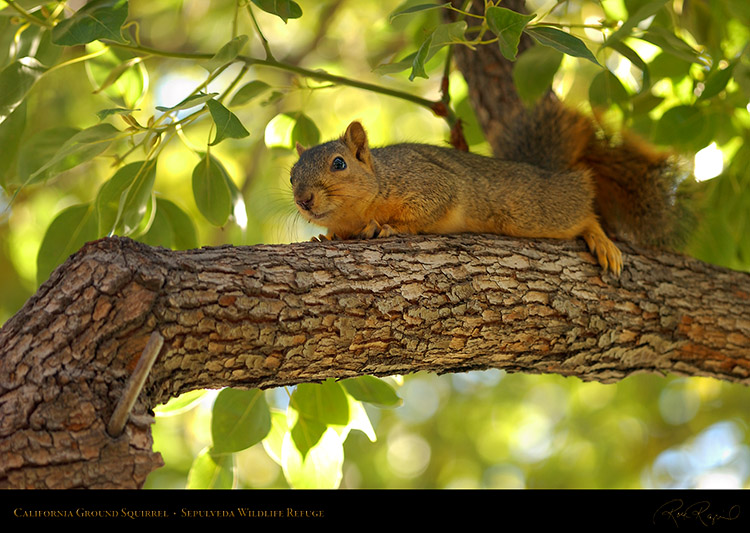 NappingSquirrel_6277