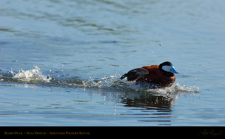 RuddyDuck_Display_X0221_16x9