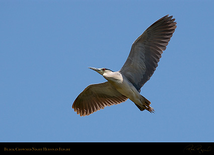 BCNheron_Flight_1145