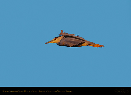 BCNheron_SunsetFlight_HS6936