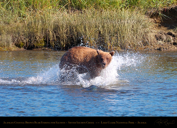 BrownBear_Fishing_HS2897