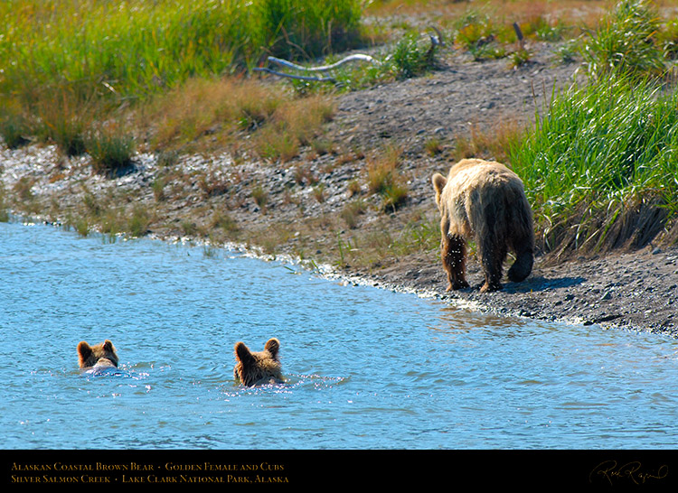 BrownBear_GoldenFemale_andCubs_X2849