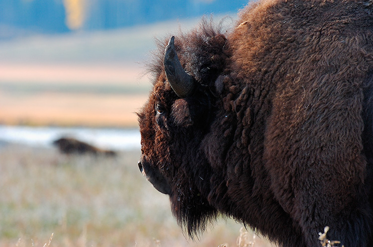 BisonPoint_ofView_LamarValley_8516