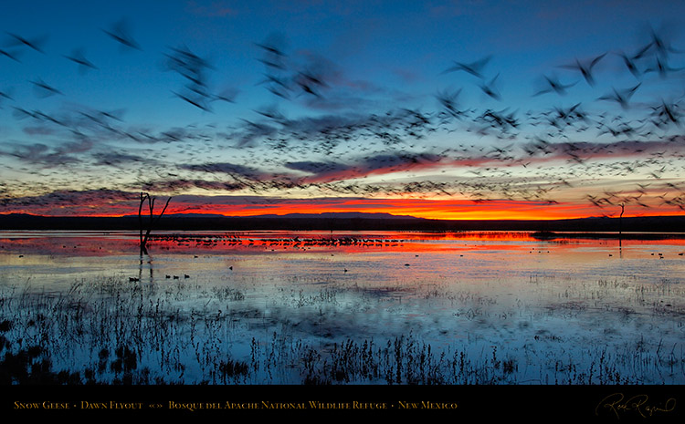 Bosque_del_Apache_Dawn_Flyout_X8728