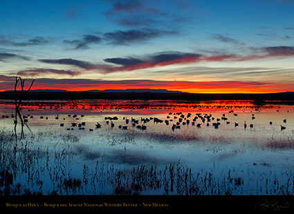 Bosque_del_Apache_Dawn_X8717