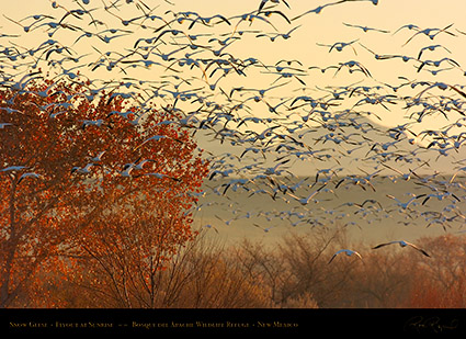 SnowGeese_SunriseFlyout_2780