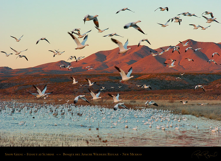 SnowGeese_SunriseFlyout_3065
