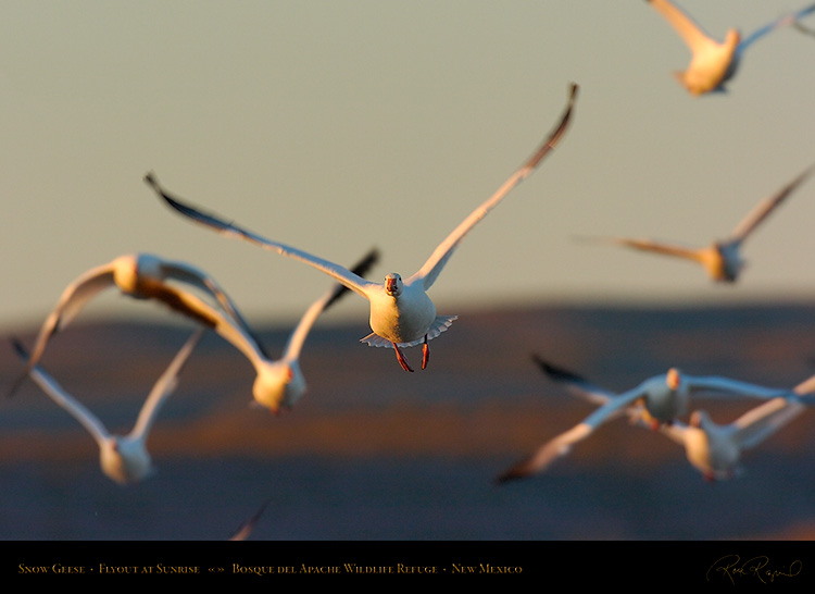 SnowGeese_SunriseFlyout_4682