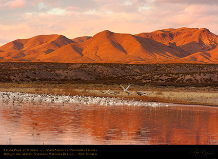 Bosque_Crane_Pool_at_Sunrise_6372