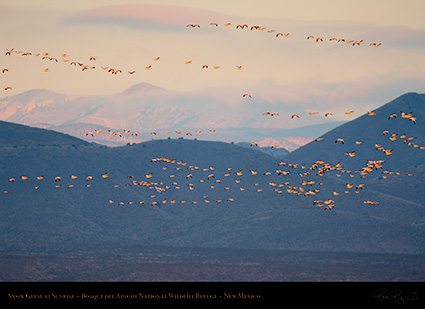 Bosque_SnowGeese_atSunrise_X3501