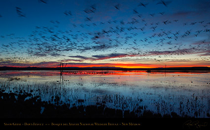 Bosque_del_Apache_Dawn_Flyout_X8730