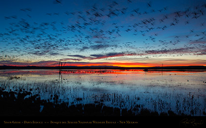 Bosque_del_Apache_Dawn_Flyout_X8732
