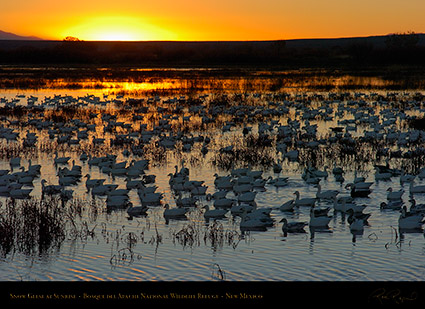 Bosque_del_Apache_Sunrise_3887