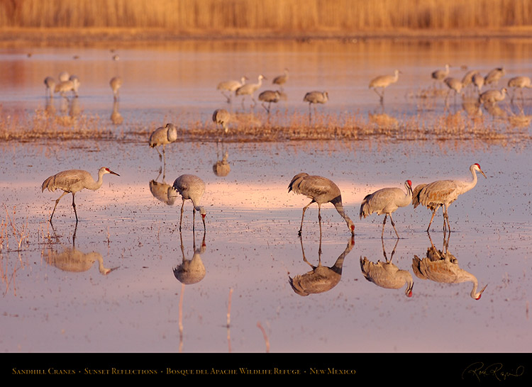 SandhillCranes_SunsetReflections_HS8174