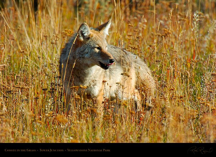 Coyote_TowerJunction_0356
