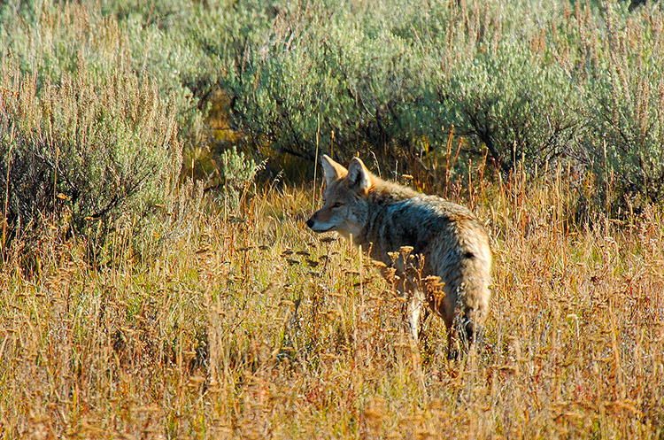 Coyote_TowerJunction_0370