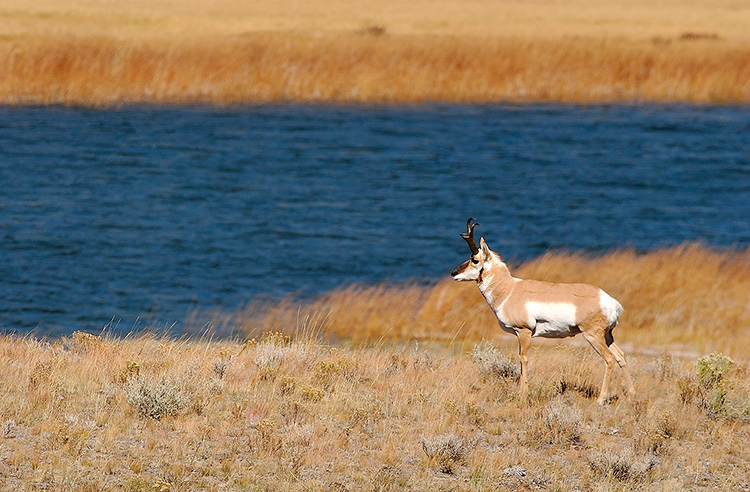 Pronghorn_BlacktailPonds_9960