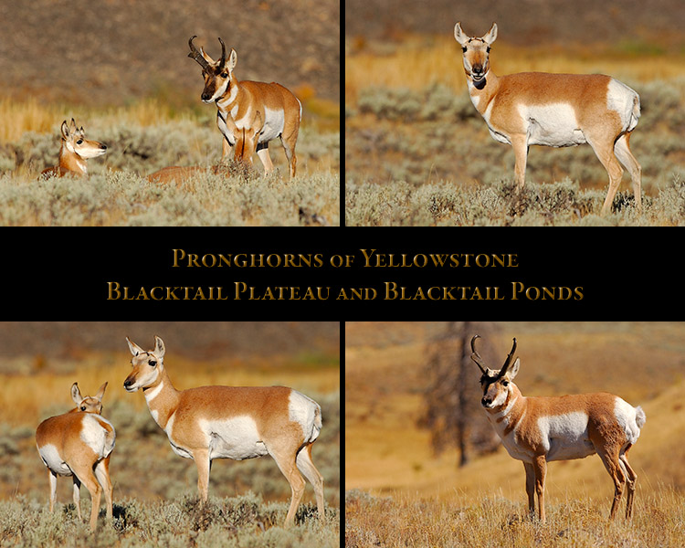 Pronghorns_BlacktailPlateau_Blacktail Ponds