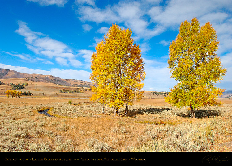 Cottonwoods_LamarValley_0852
