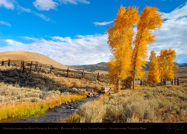 RoseCreek_Cottonwoods_LamarValley_0850