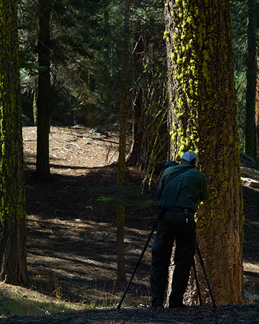 Ron_ShootingDeer_Yosemite_X0624s